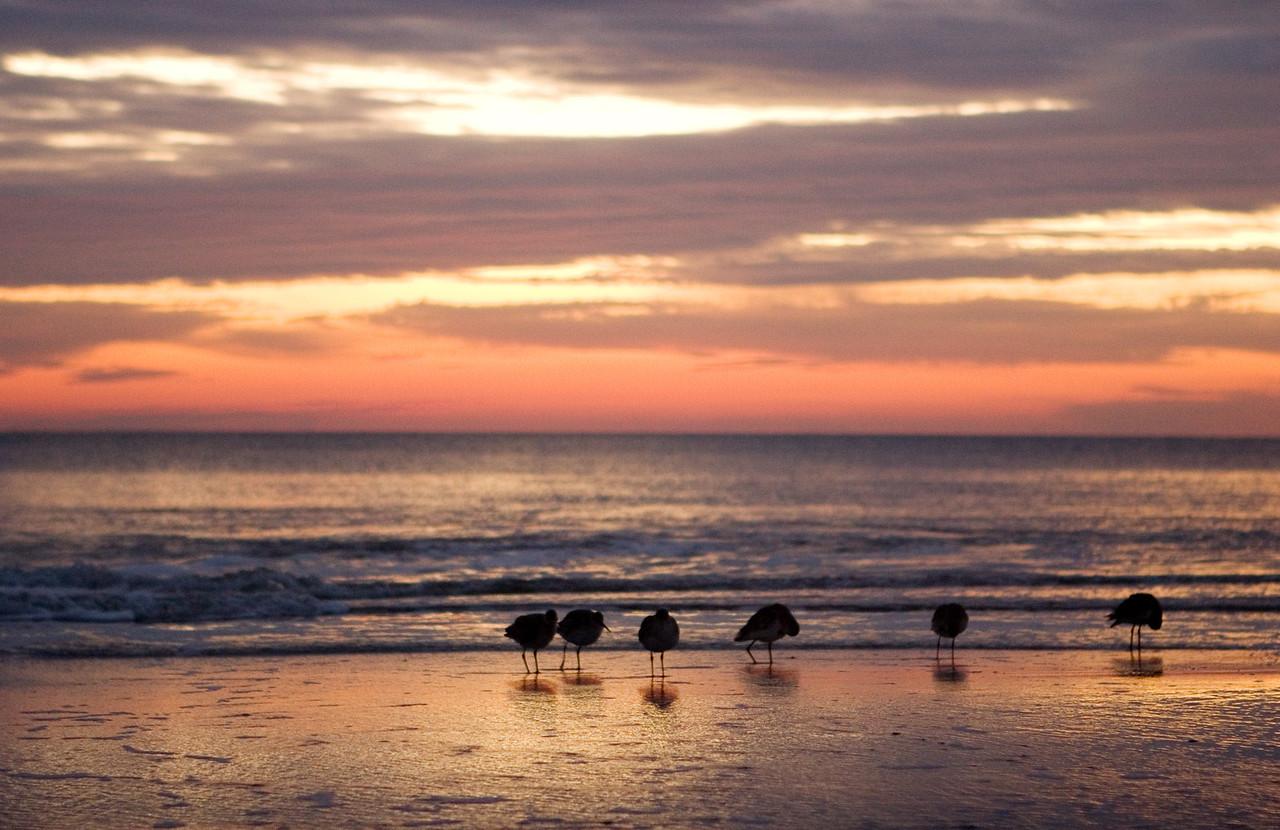 Shores Birds on Jacksonville Beach, Florida near the pier.