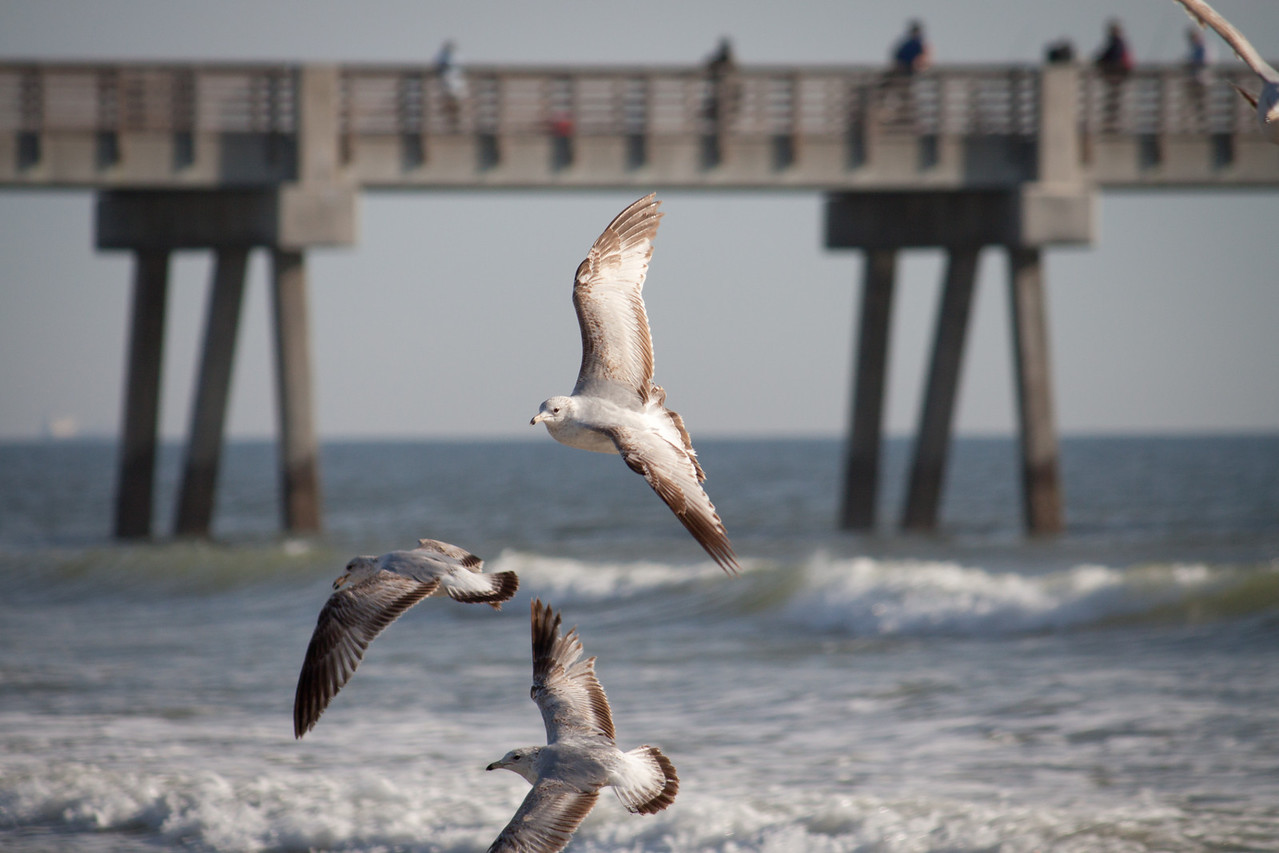 Seagulls at Jacksonville Beach Pier